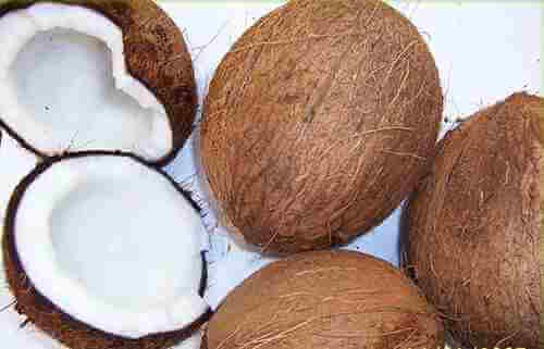 chữa hắc lào bằng dừa